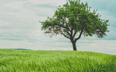 The Leadership Tree